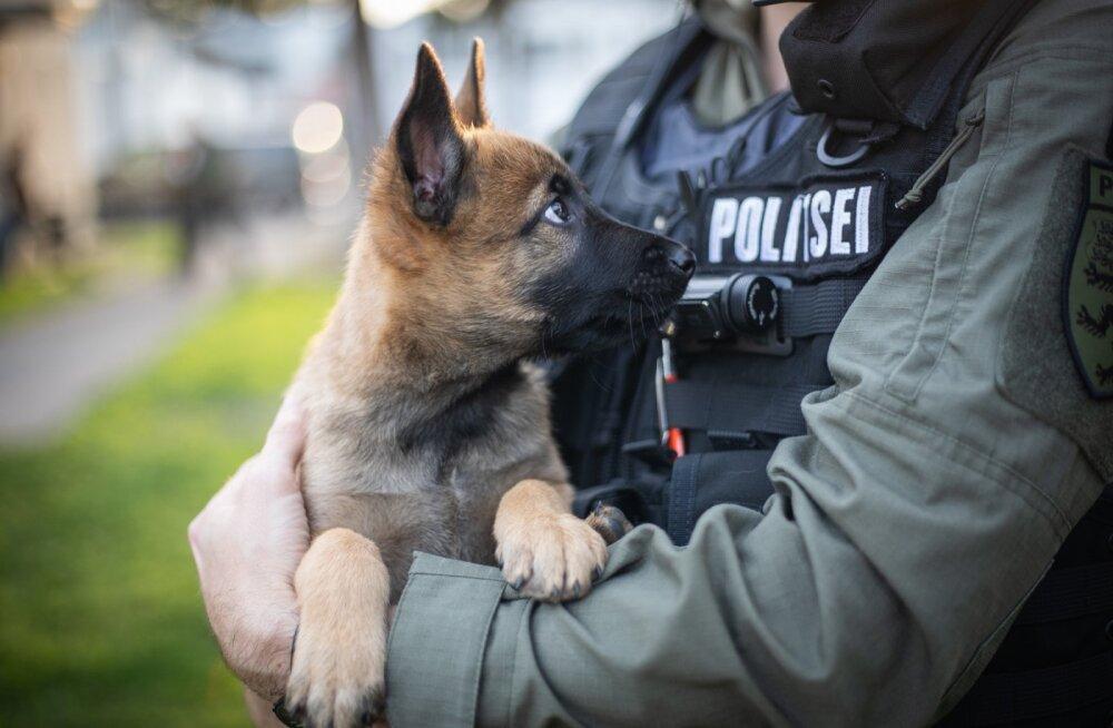 ФОТО   В рядах полиции очередное пополнение — щенок Сям!