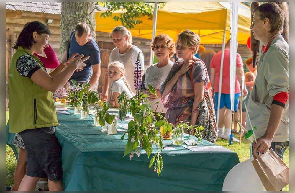 Saabuv nädalavahetus on Ökofestivali päralt