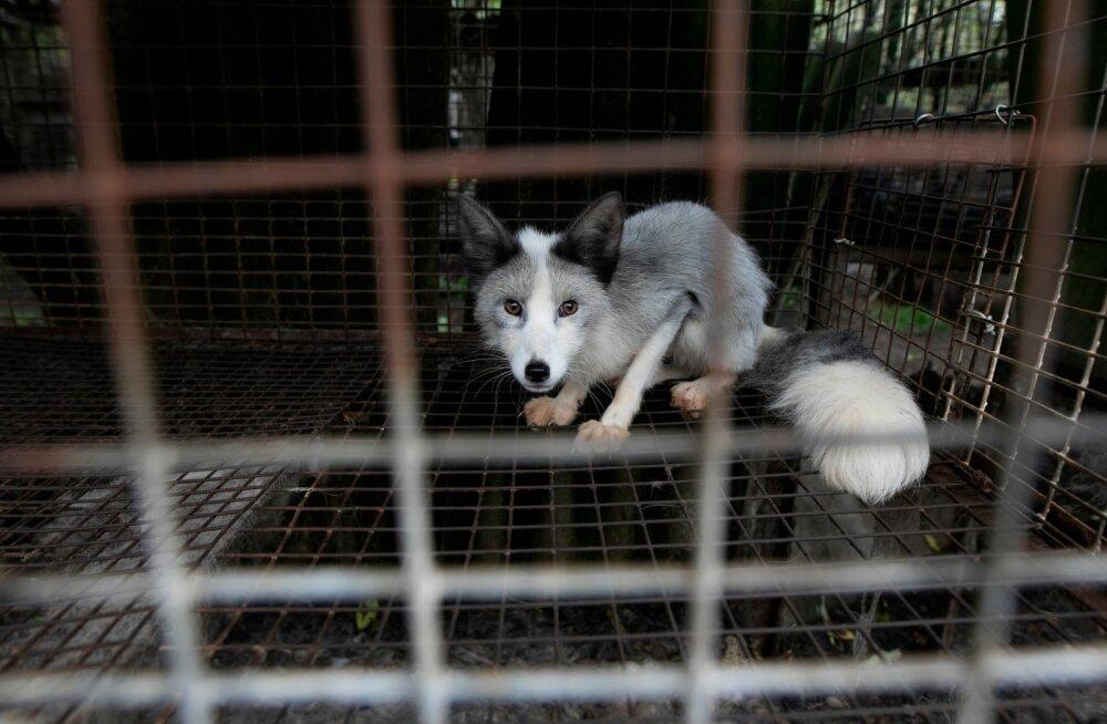 Poola karusloomafarmi jahmatavad leiud