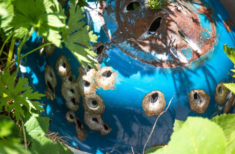 Vana pesukauss Mikk Tarraste taluõuel on saanud kümneid kuulitabamusi.