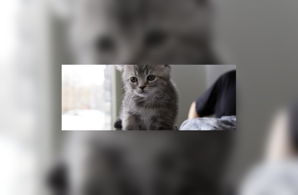 Baškiir õpetas alaealist tütart kassipoegi kägistama
