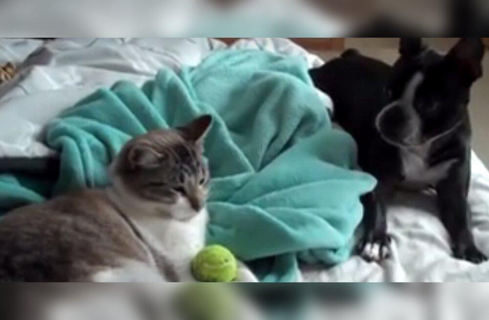 VIDEO: Nalja nabani! Kassidel on koerte üle salapärased võimed
