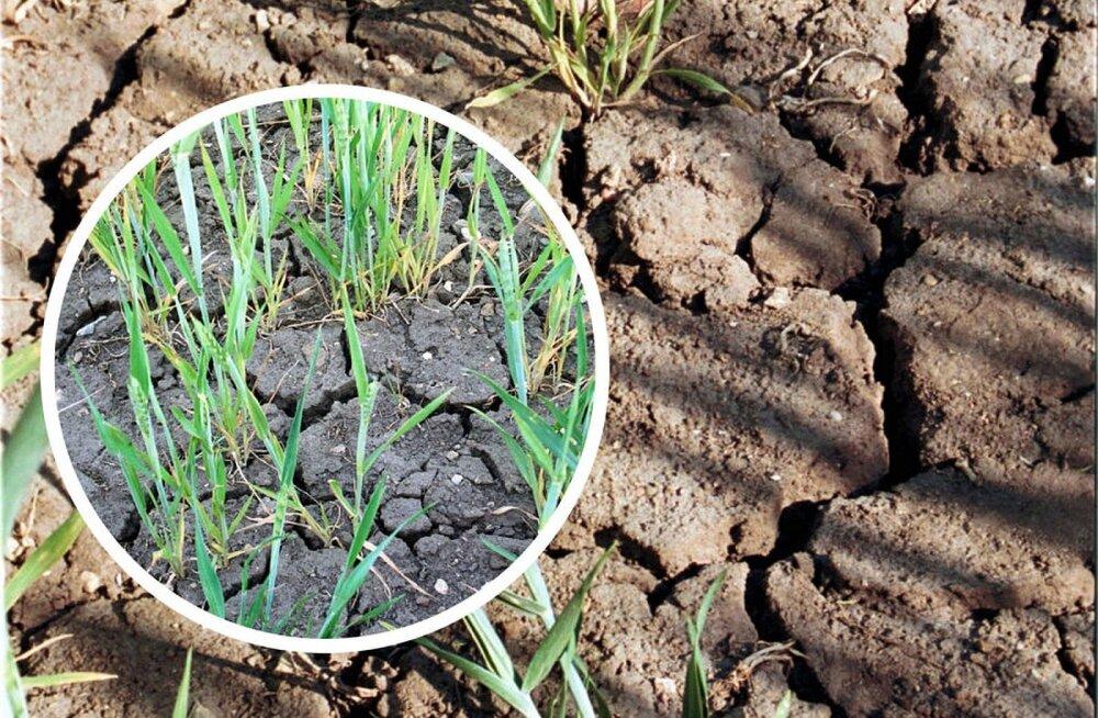 Maaeluminister palus Euroopa Komisjonist põllumeestele abi: sellist põuda pole nähtud alates aastast 1950