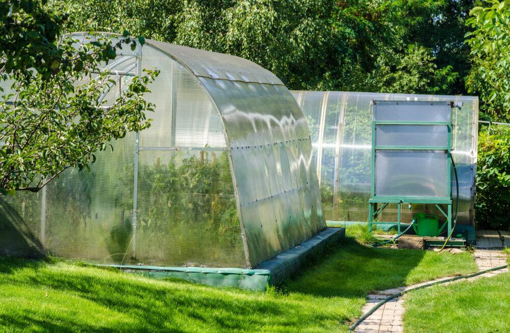 Kasvuhoonele tuleb teha sügishooldus