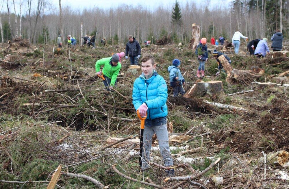 ФОТО: При посадке леса в окрестностях Нарвы добровольцы нашли снаряд и гранату