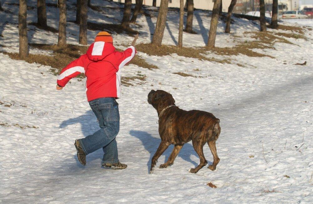 Poiss ja koer
