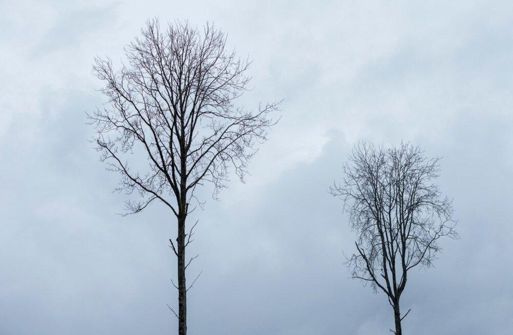 В Эстонии сегодня обновлен погодный рекорд