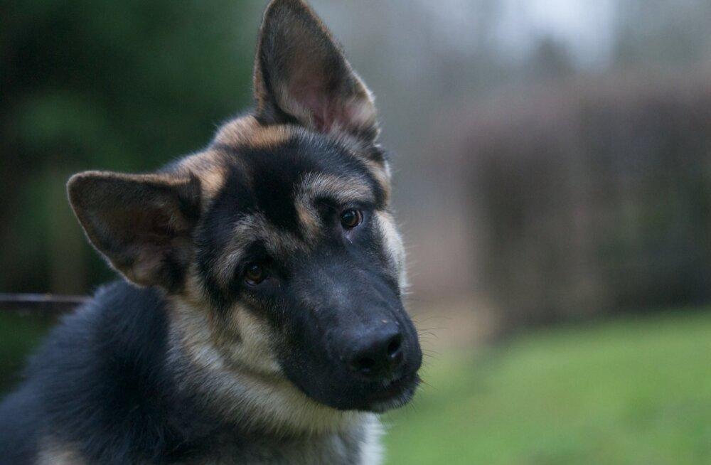 Leelo Tungal koeraga