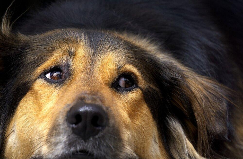 Halb uni: kas lemmiklooma võib keset õudusunenägu üles äratada?