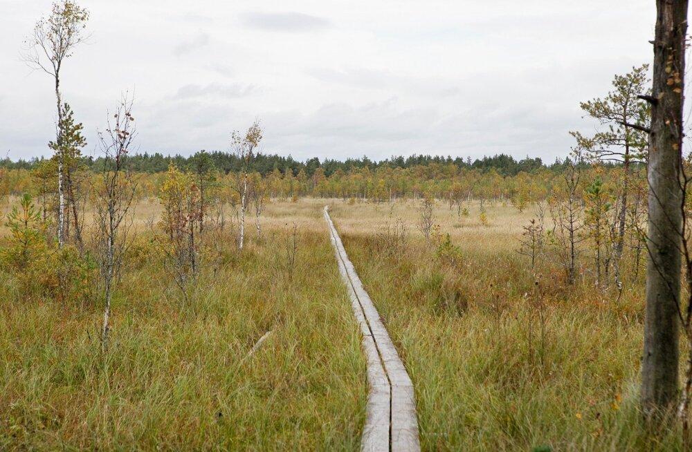 220 talgulist ehitavad Väätsa rabasse laudtee