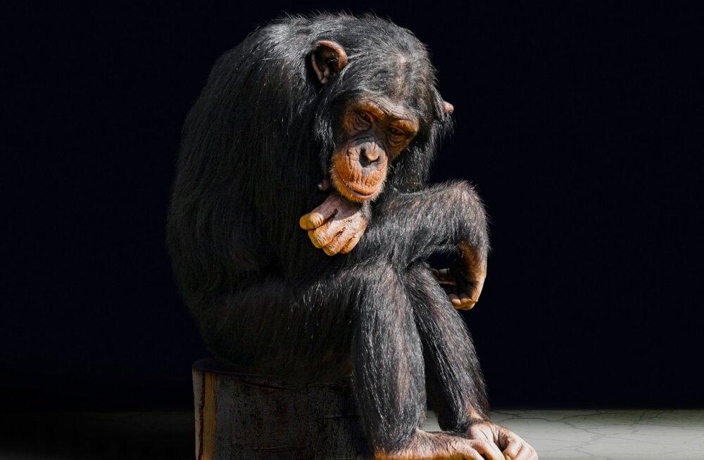 Südantlõhestavad kirjeldused | Kas ja kuidas loomad teineteist leinavad?