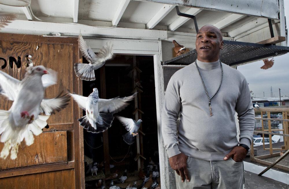 Mike Tyson sattus elu esimesse kaklusse 10-aastaselt: üks mees rebis tuvil pea otsast ja viskas mind verega