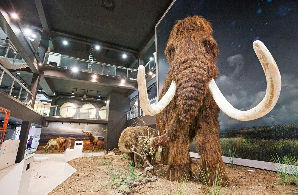 Kambodžas leiti müügilt mammutiluust ehteid