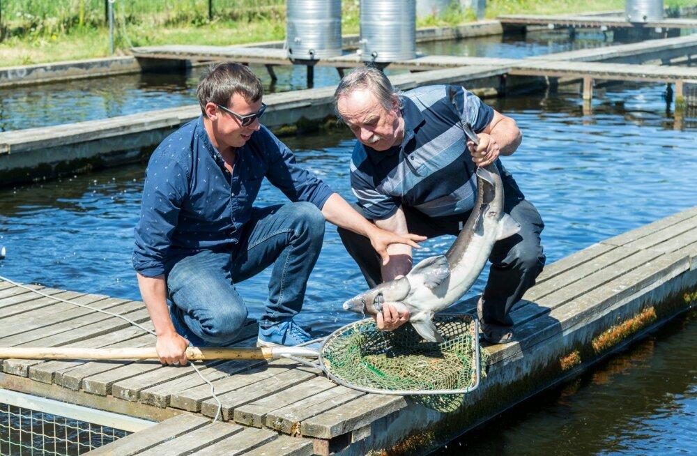 Martin ja Aarne Liiv toimetavad edukalt Härjanurme kalatalus.