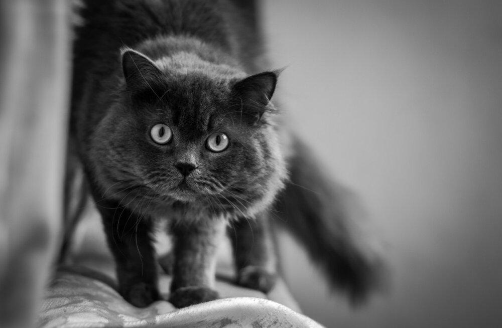 Kas kassid suudavad surma ette näha?