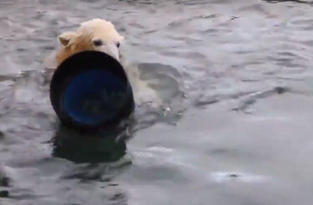 VIDEO | Nii maa peal kui ka vee all! Vaata, millise vahva mänguasja Aron ja Friida said