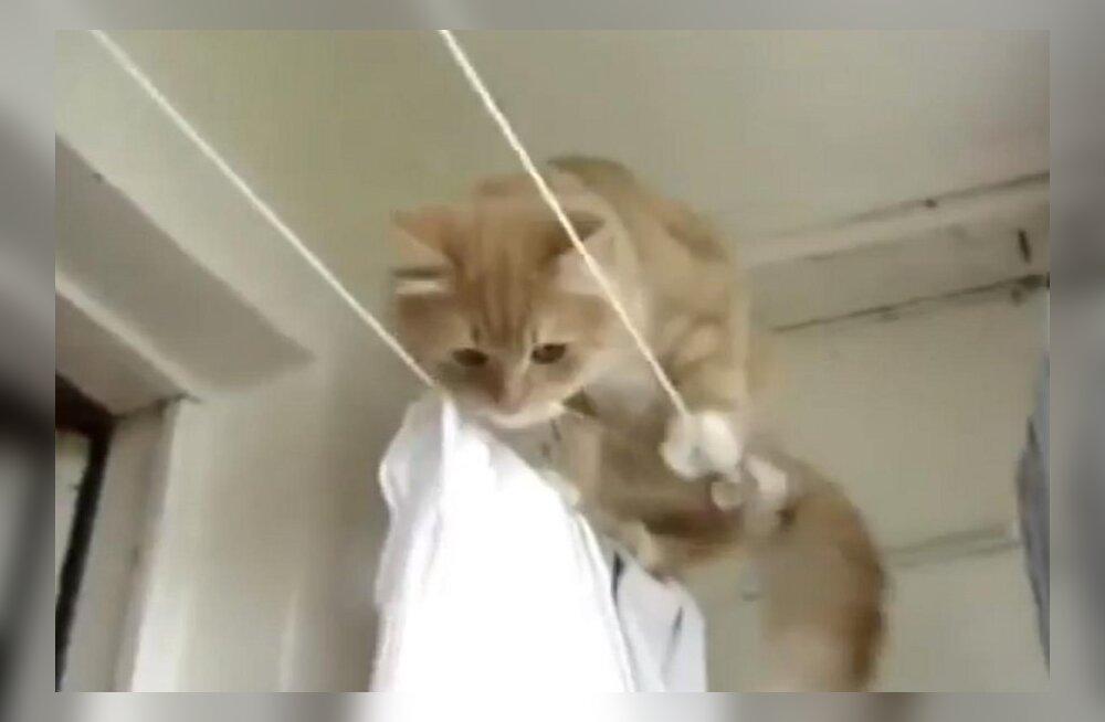 bfda427a234 VIDEO: Kas kassile sobib köielkõnd? Ei! - Publik