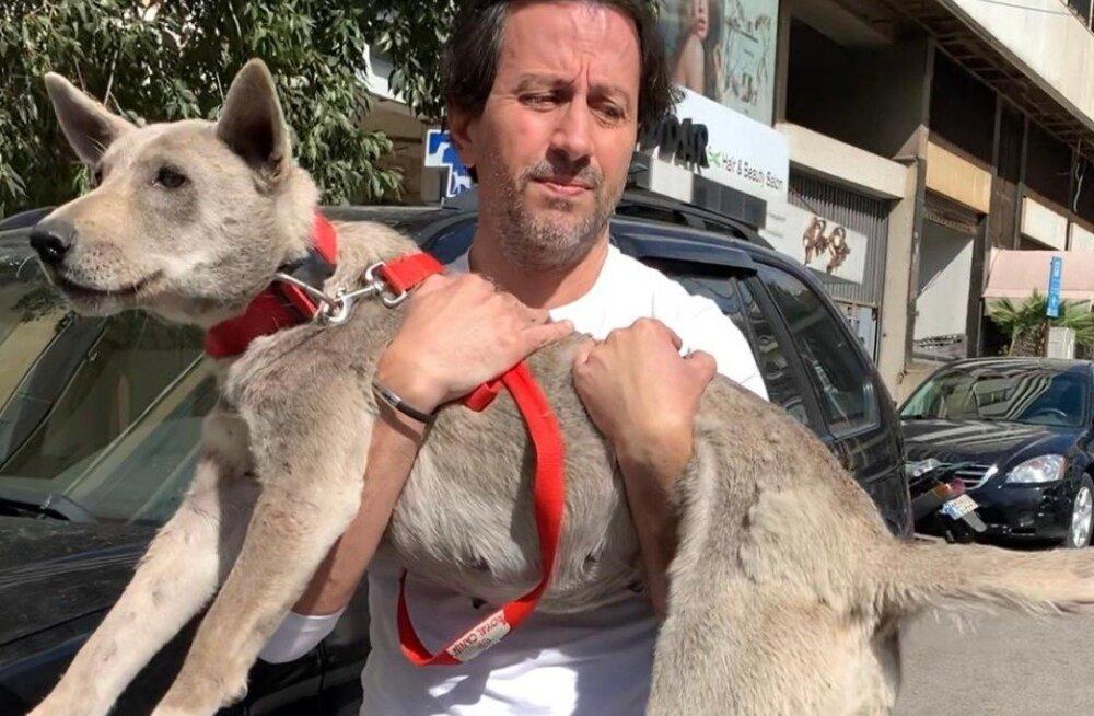 Liigutav lugu: vabatahtlikud on Beiruti plahvatuse järel aidanud uuesti kohtuda enam kui 20 lemmikloomal ja omanikul