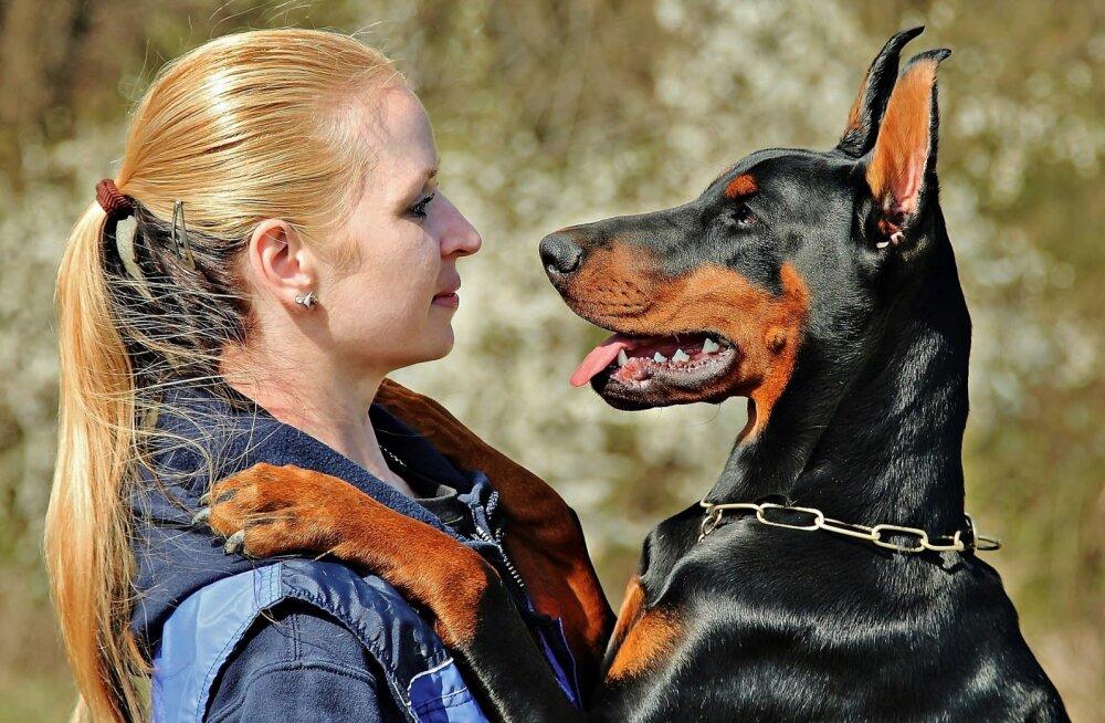 ТОП-7 пород собак, идеально подходящих для охраны дома