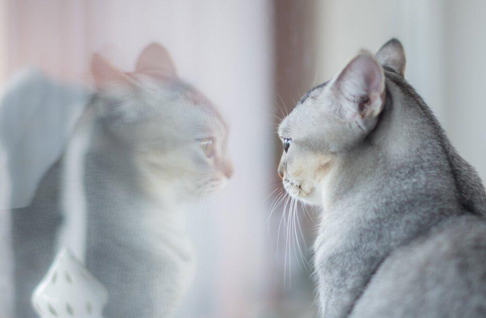 11 käepärast nõuannet, kuidas oma kassi elu teadlikult pikendada