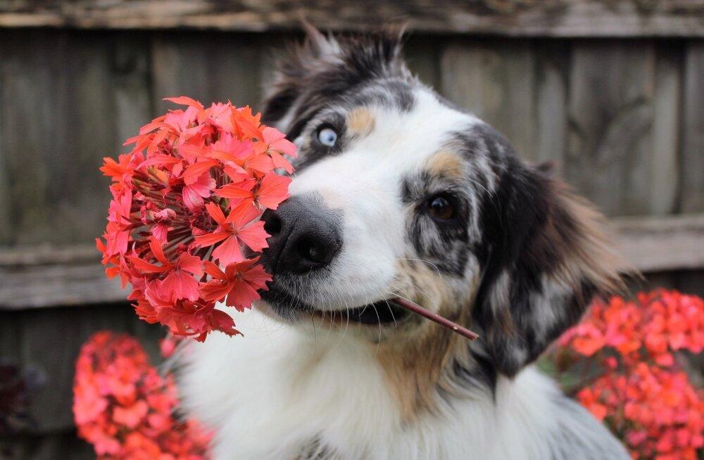 OLE TEADLIK | kevadises aias on lemmikloomadele mitmeid ohte