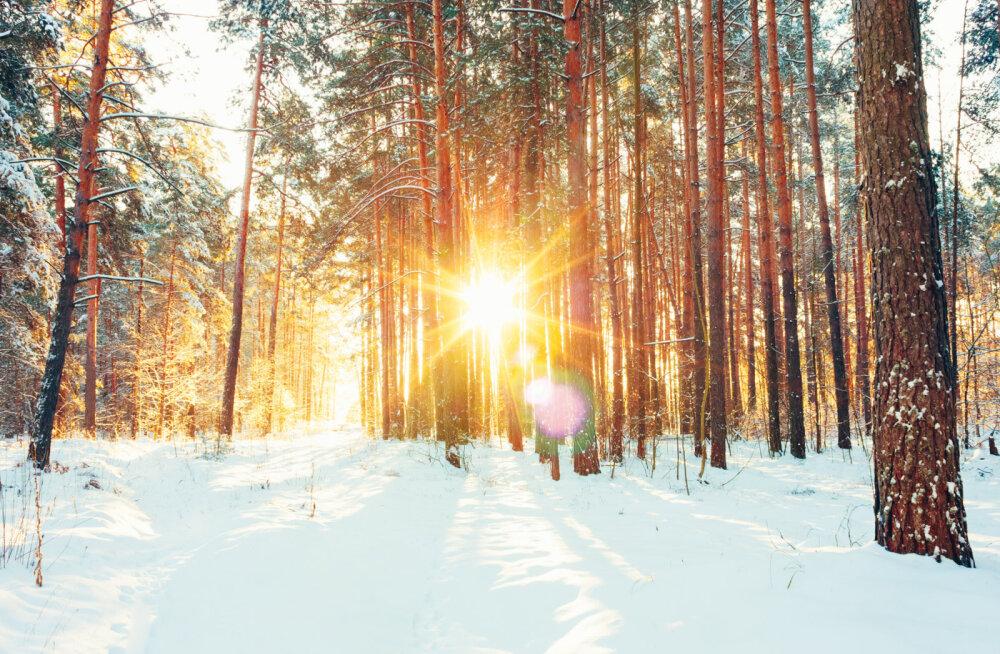 Täna on talvine pööripäev: müstiline aeg, mil pööratakse elus uus leht