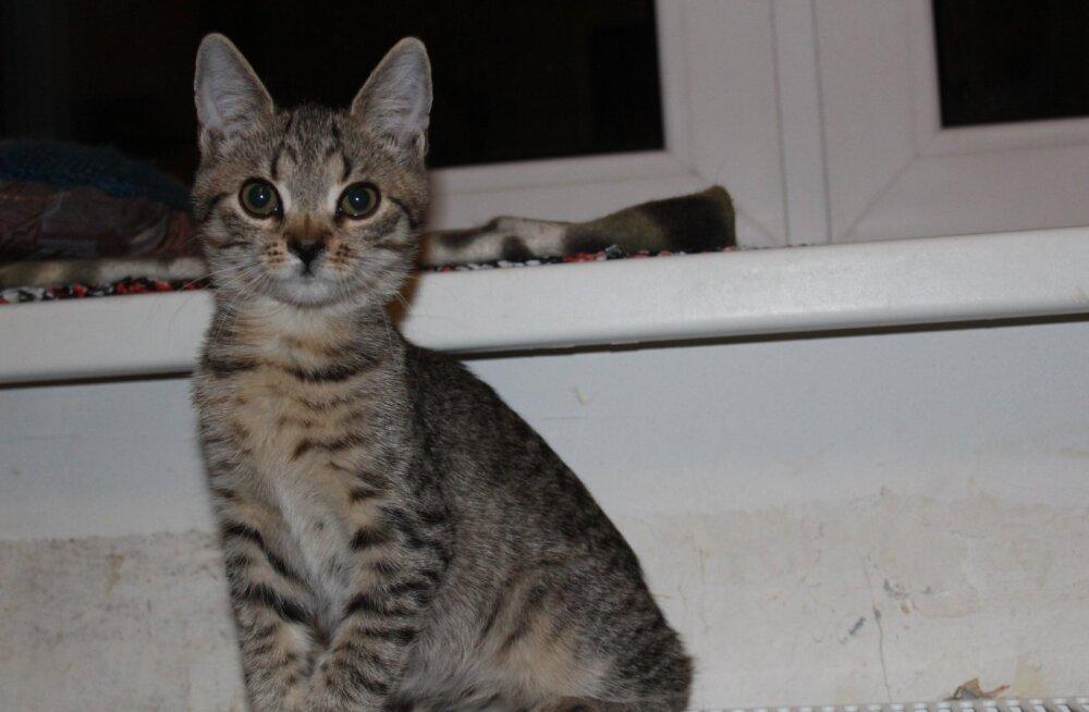 Pesaleidja palub abi: aita kassipoeg operatsioonile!