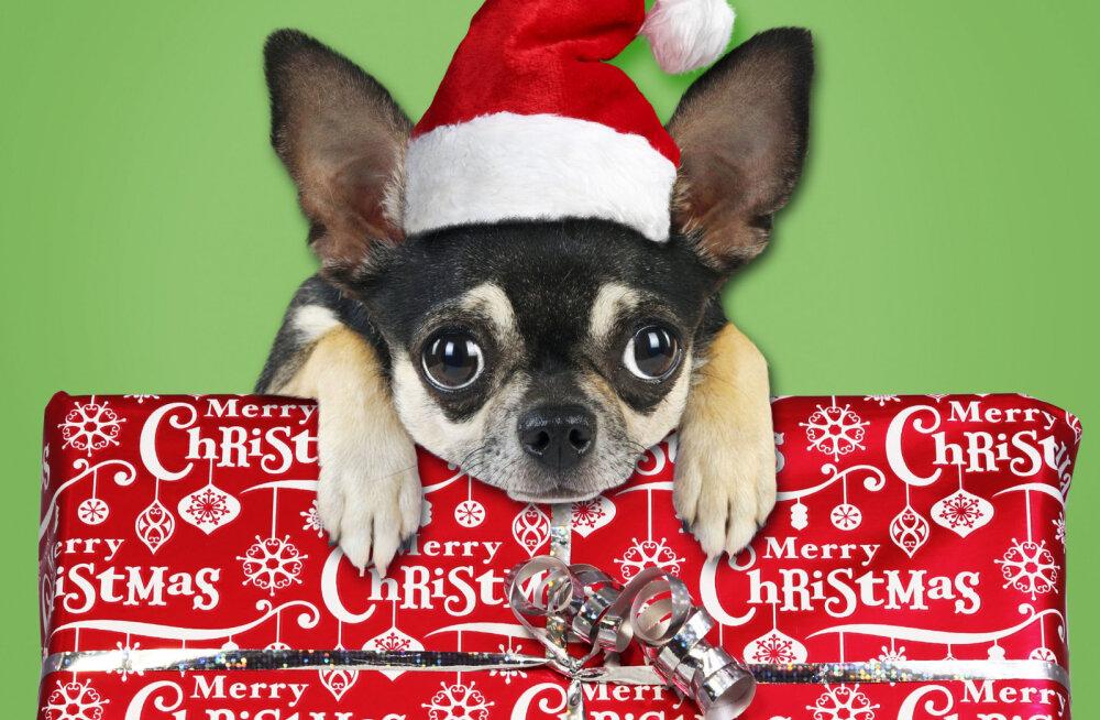 Не позорьтесь: 4 вида худших новогодних подарков