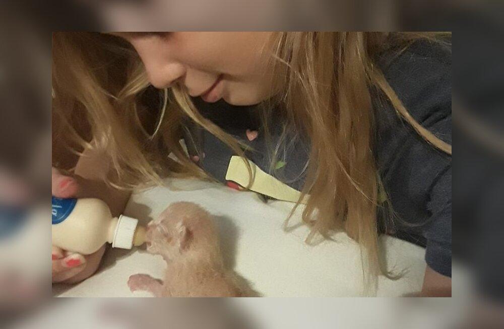 Texases hukkus traagilise õnnetuse tagajärjel väikene tüdruk, kes kodus lõksu jäänud kassipoegi päästa üritas