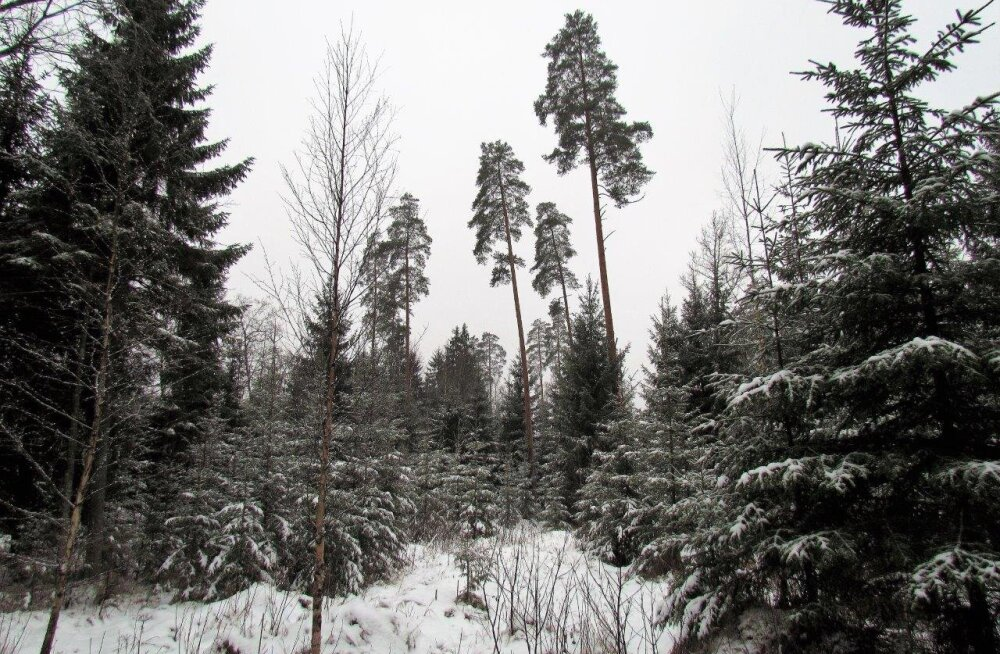 Leili metsalood | Põdramets - puhkamiseks ja toiduks