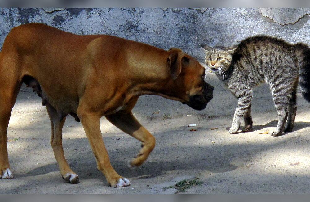 Piilume lemmikloomade psühholoogiasse: miks koerad ja kassid omavahel läbi ei saa?