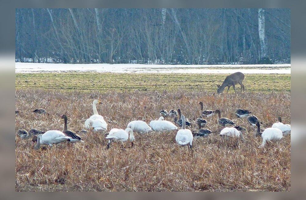 656d1c7388e Kõik linnud saabuvad korraga - Maaleht