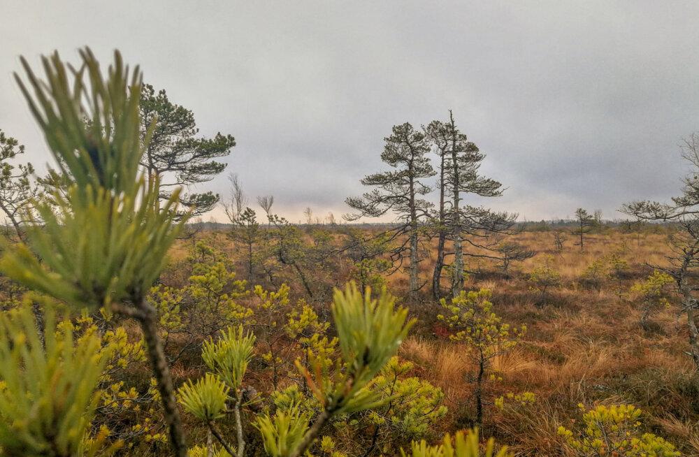 VIDEO   Tolkuse raba — tõenäoliselt üks parimaid loodusturismi objekte Eestis