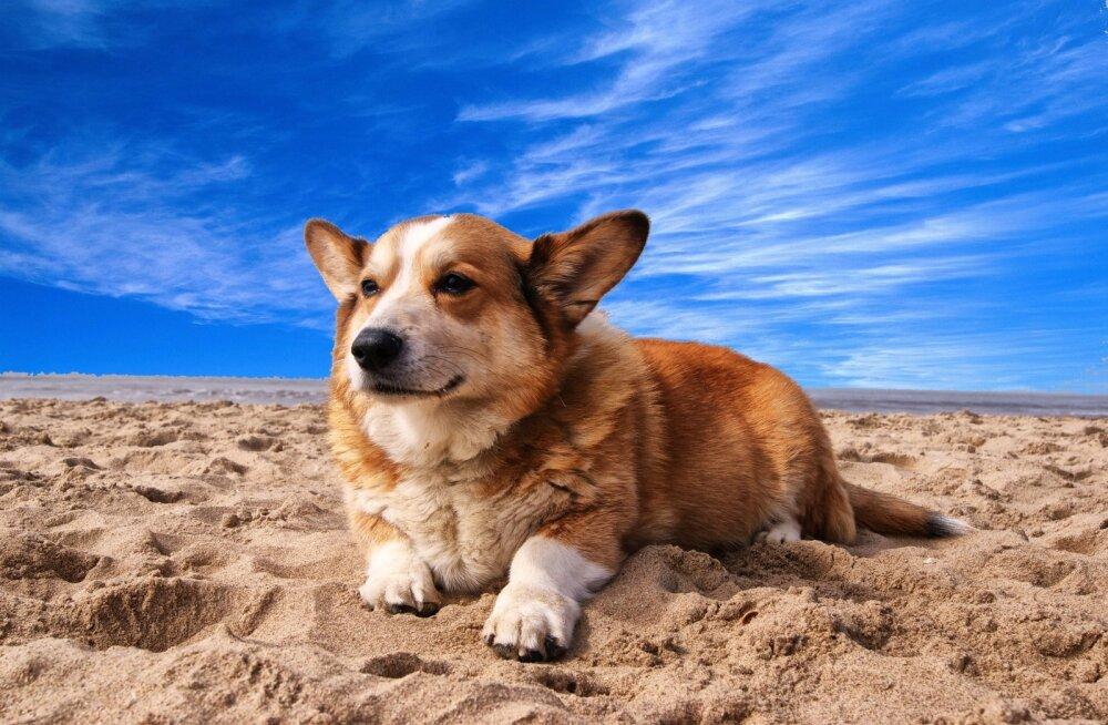 Топ-7 самых умных маленьких собак