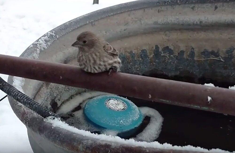 VIDEO: Lind jäätus metalltoru külge kinni. Vaata, kes ja kuidas tema elu päästis!