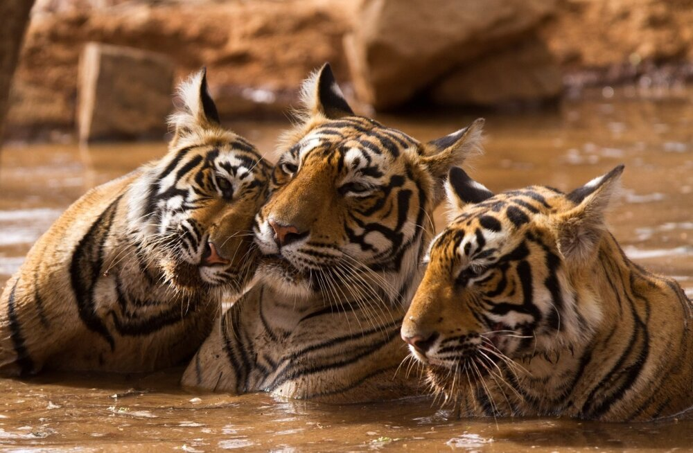 India looduspark