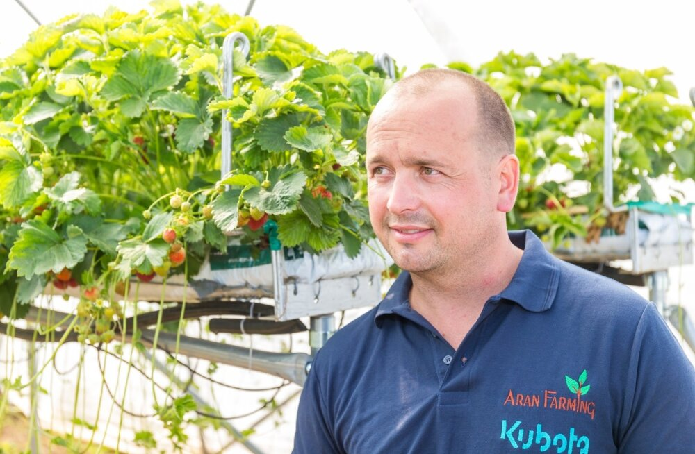 Rahvas armastab maasikaid ja valis rahvapõllumeheks maasikakasvataja Paavo Otsuse.