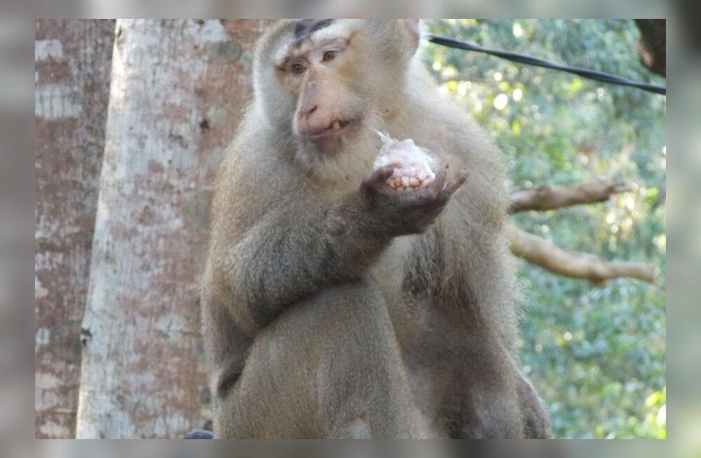 Reisikiri Kambodžast, 15. osa: ahvide planeet