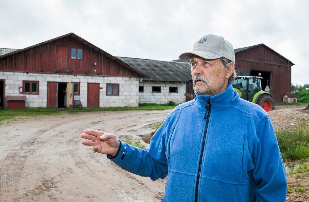 Kellamäe talu peremees Jaak Kõiv on jätnud ukse lahti: kui ime peaks juhtuma ning piimahind tõuseb, jäävad kevadel lüpsma tulevad mullikad lauta alles ning piimatootmine jätkub.