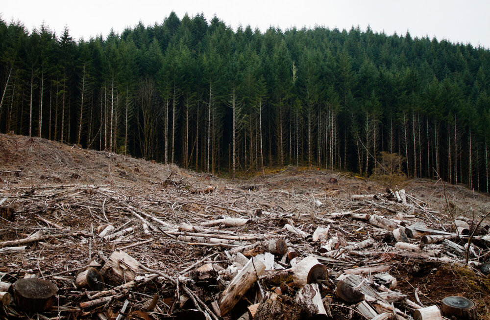 Uuring: ökomärgised on oma tõsiseltvõetavuse täielikult kaotanud