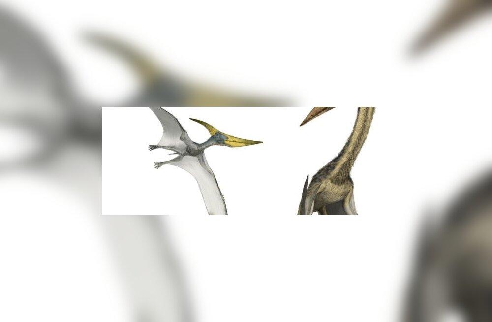 Mis värvi olid eelajaloolised linnud?