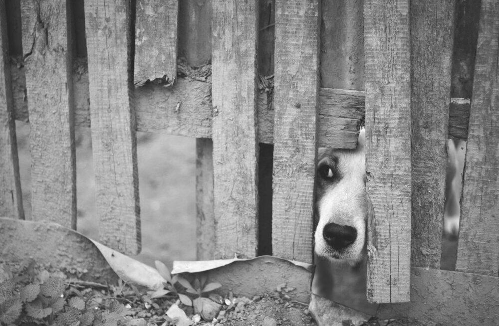 """Suur võit loomasõpradele: Venemaal tänavate """"puhastamise"""" eesmärgil kodutuid loomi hukata enam ei saa"""