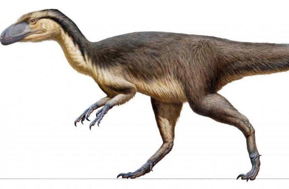 Lõunapooluse lähedal elasid pisikese koera suurused ja sulgedega kaetud dinosaurused