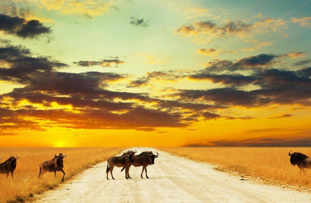 Namiibia – autoturisti tõotatud maa