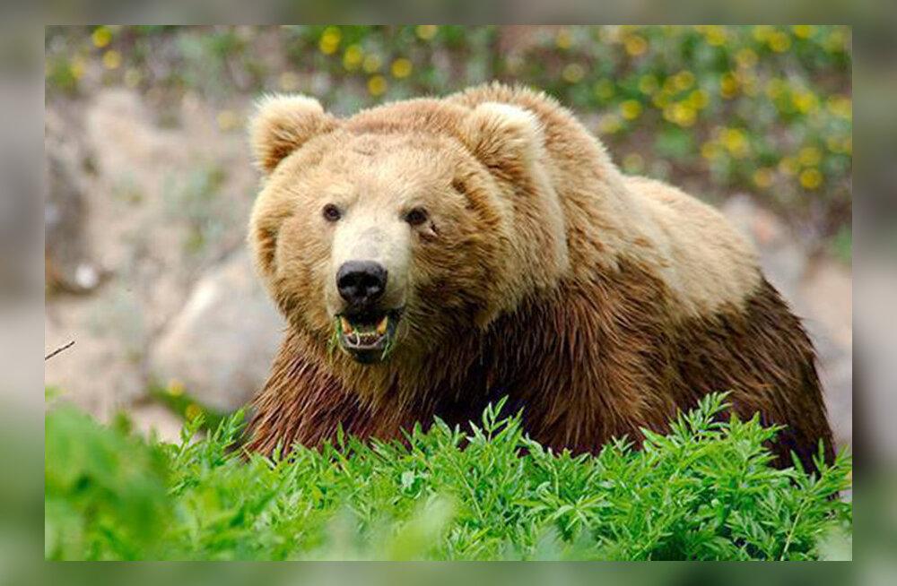 MEIE MAA | Karu külvab Ida-Saaremaal paanikat