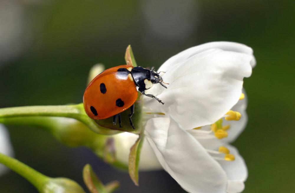 Šamaan Anu Pahka: sümbolid loodusest, mille nägemist tasub võtta kui kõrgemalt saadetud märki