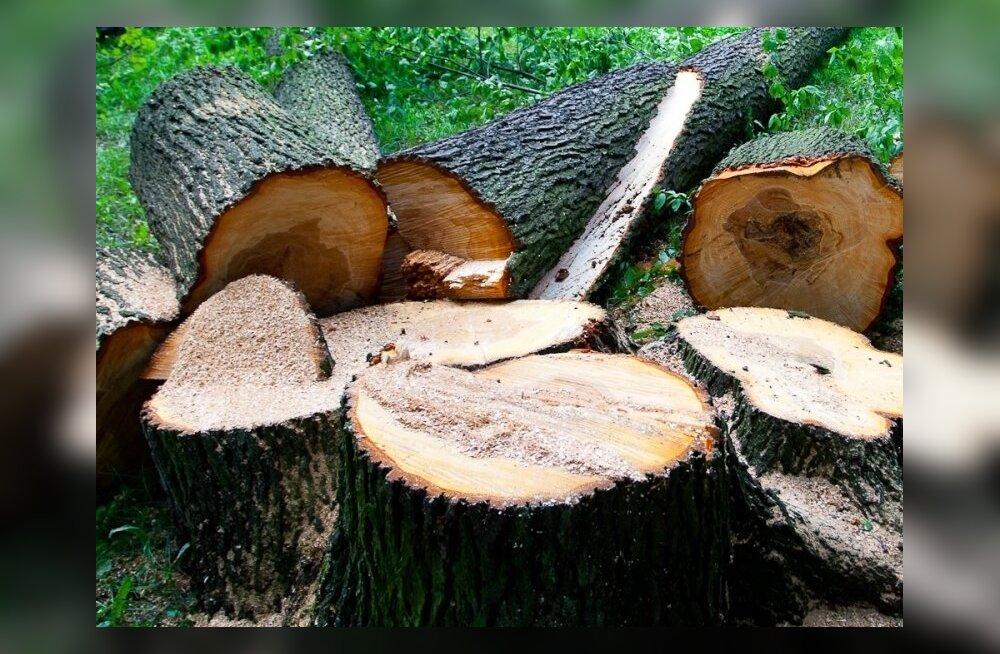 Elanikud pahased: vald langetab armsaid puid