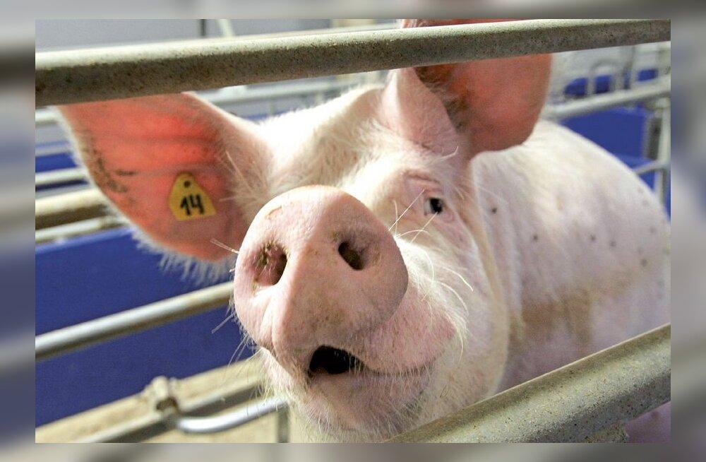 Из-за новой директивы ЕС свинина может подорожать