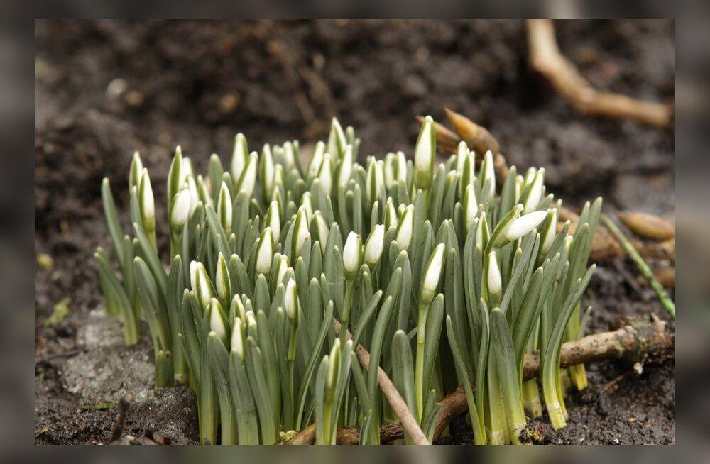 Su keha häälestub uuele aastaajale — loe, mis organismis kevadel toimub!