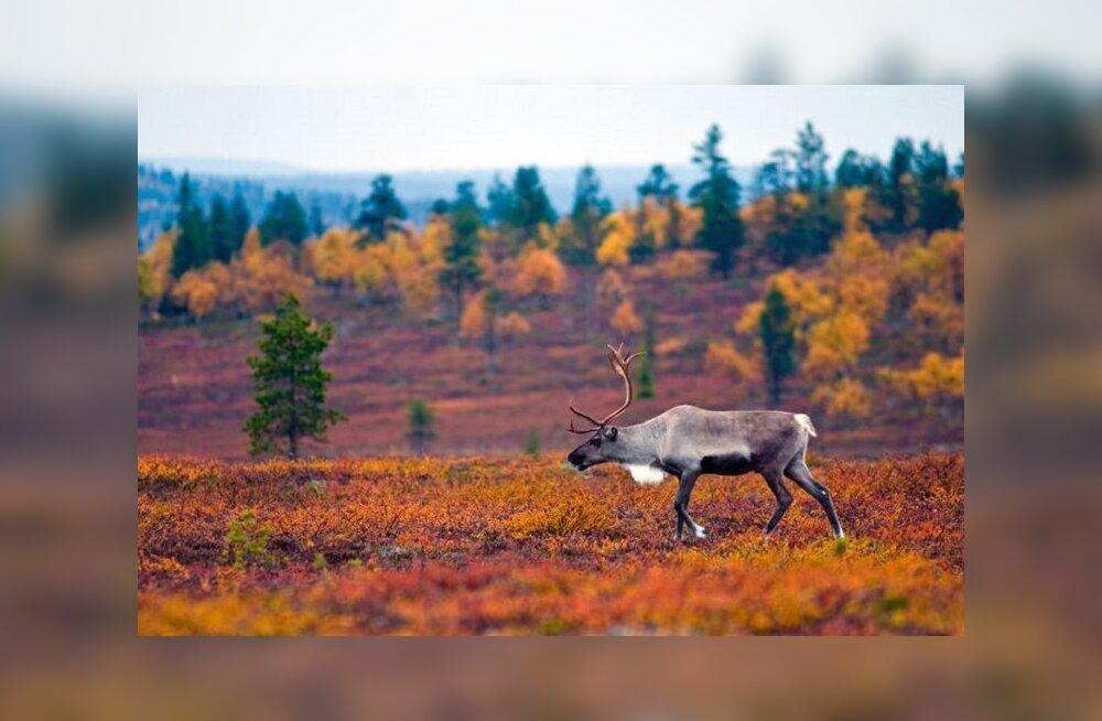Финляндия — идеальное место для наблюдения за осенним буйством красок